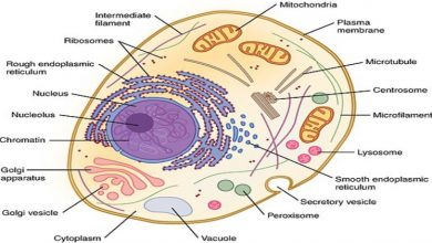 Photo of Important Functions Of Cell Organelles